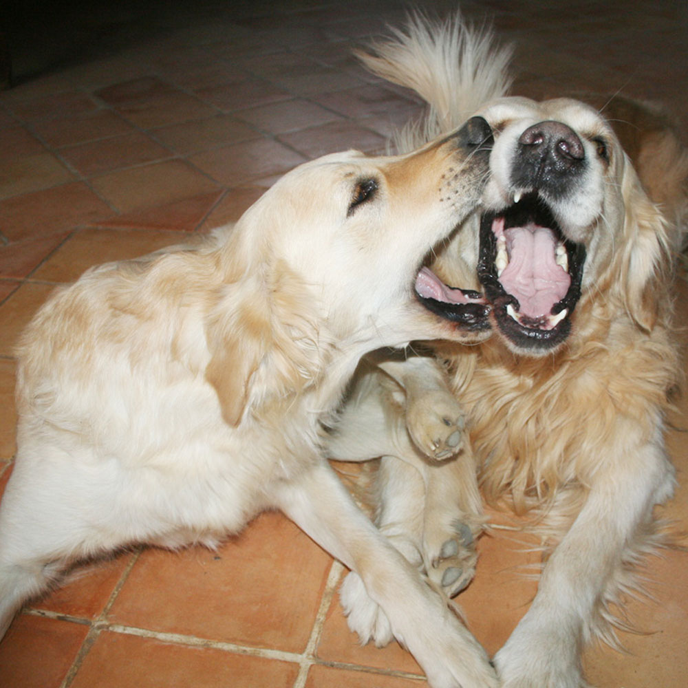 Accueil - éducation canine reims, comportementaliste canin